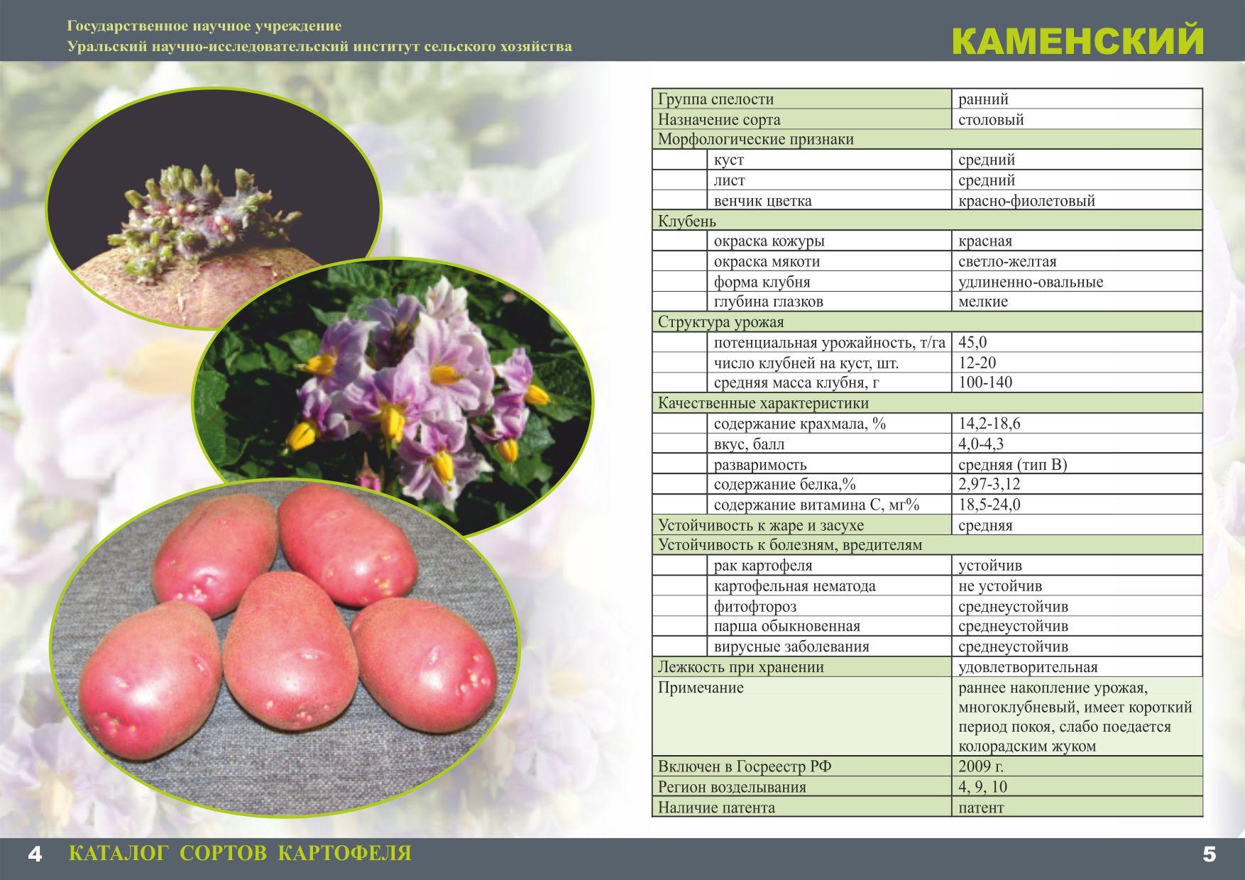 что сохранить каталог сортов картофеля с фото и описанием варианты