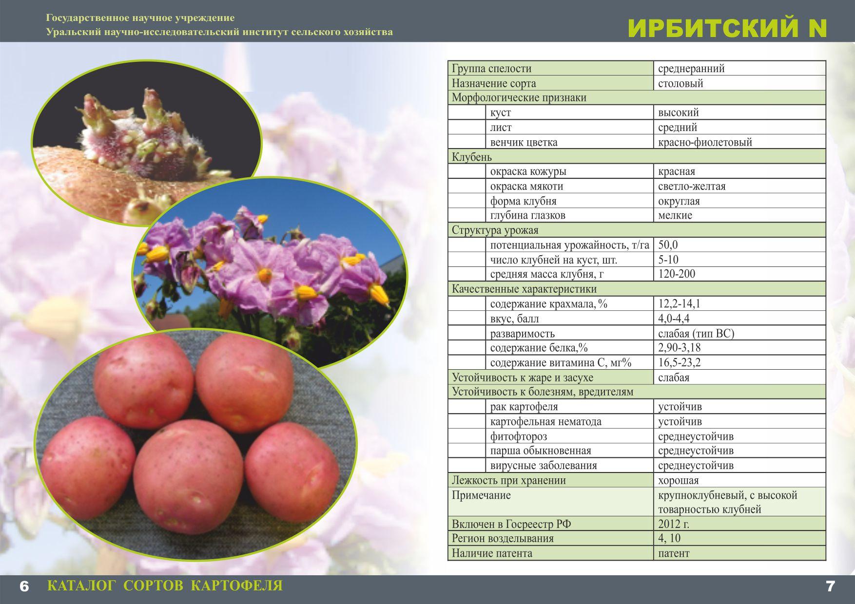 каталог сортов картофеля с фото и описанием архипелага является вулкан